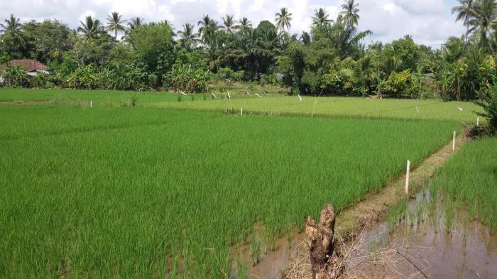 Kodim OKU Dapat Penghargaan dari Kementerian Pertanian