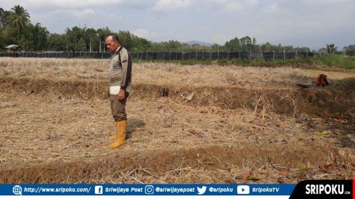 Irigasi Ambruk Petani di Pagaralam Tidak Bisa Garap Sawah Karena Pasokan Air Tidak Ada