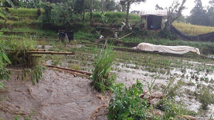 Gawat, Petani Desa Mekar Alam Pagaralam Terancam Gagal Panen, Sawah Rusak Bak Disapu Banjir Bandang
