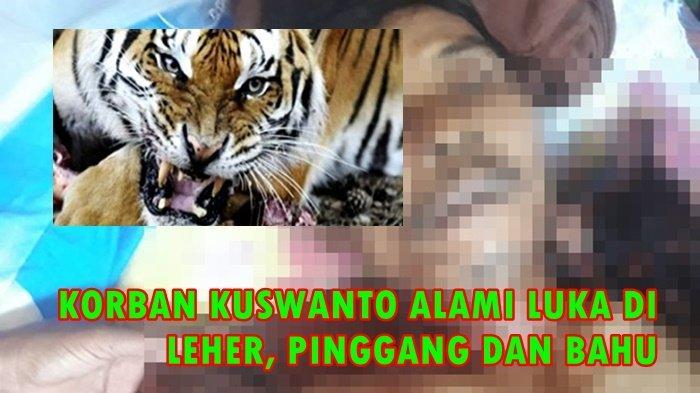 Beredar Video Menyatakan Kemunculan Harimau di Pagaralam adalah Jelmaan Puyang Raje Nyawe yang Marah