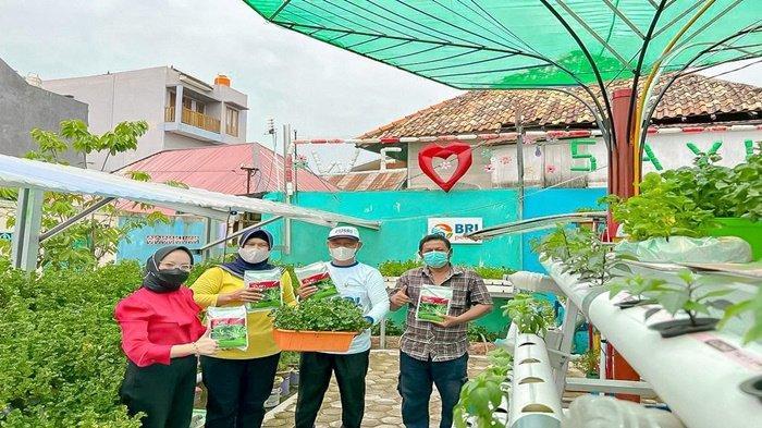 Kampung Sayur Hidroponik Membina Petani Meningkatkan Produksi dan Daya Jual Tinggi