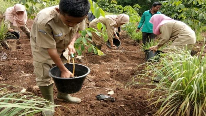Guru Besar IPB : Sektor Pertanian Terbukti Jadi Penolong Ekonomi Nasional