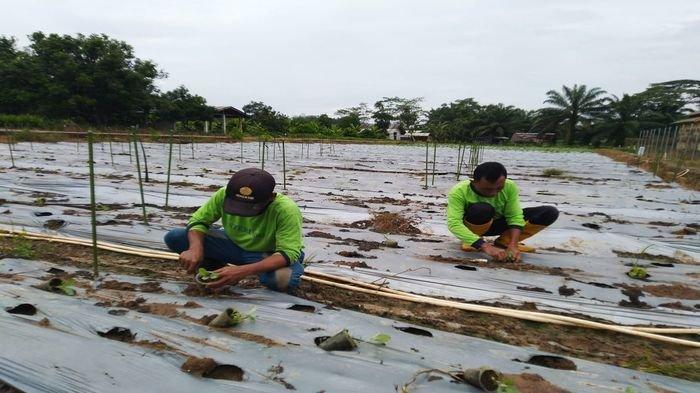 Akademisi : Sektor Pertanian Masih Akan Tumbuh di Kuartal Berikutnya
