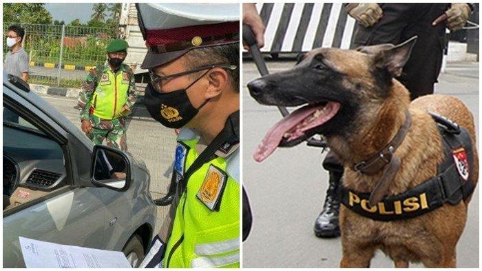 Nangis Tersedu-sedu Didatangi Anjing Polisi, Sopir Travel Gelap Akhirnya Jujur : Saya Mau Mudik
