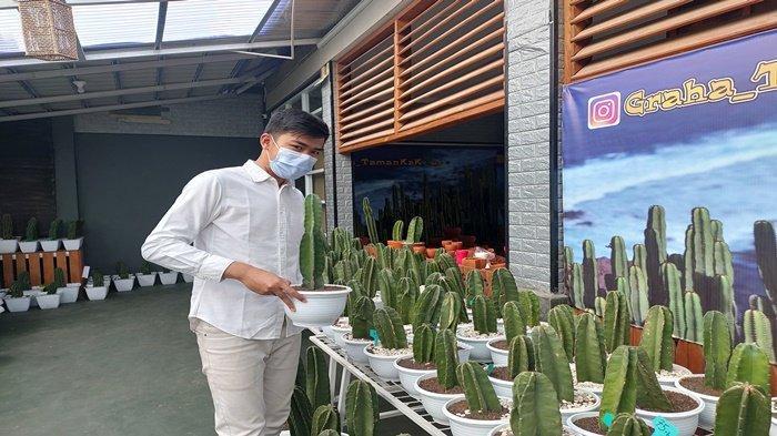 Berawal dari Coba-coba, Pemuda di Palembang Ini Raup Pundi-pundi Uang dari Tanaman Kaktus