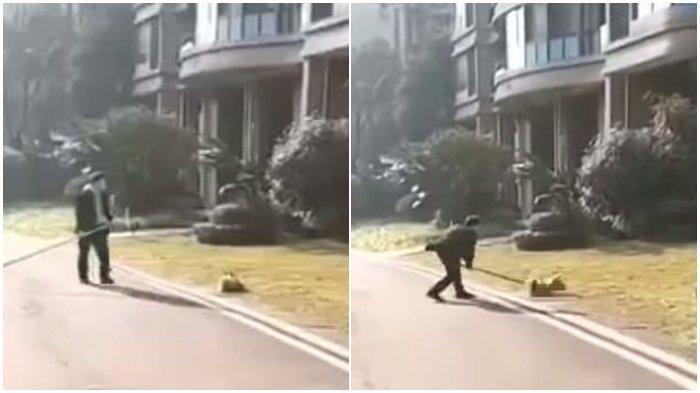 Takut Terinfeksi Virus Corona, Petugas di China Pukuli Anjing, Aksi Kejamnya Dikecam, WHO Ungkap Ini