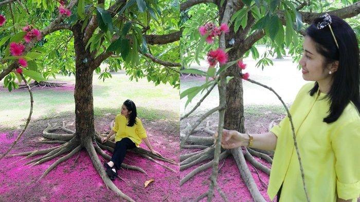 Bukan di Jepang ataupun Korea, Taman yang Jadi Tempat Favorit Swafoto Ini Ada di Sumsel