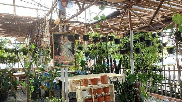 Sambil 'Ngeteh', Bisa Lihat Tanaman Ekor Naga di Cafe Hijaukan Teras