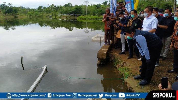 GUBENUR Sumsel Herman Deru Tebar Ratusan Ribu Benih Ikan di Tebat Gheban Kota Pagaralam