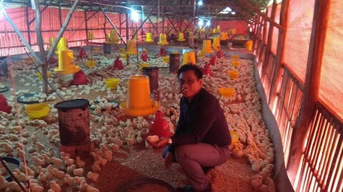 Menyiasati Anjloknya Harga Ayam Potong, Banyak  Peternak Terpaksa Mengosongkan Kandang