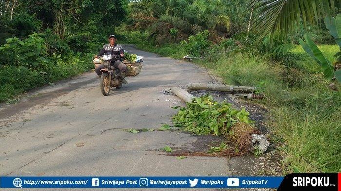 Satu Kecamatan di Daerah Ini Gelap Gulita, Cuma Gara-gara Pohon Karet, Ternyata Ini Penyebabnya!