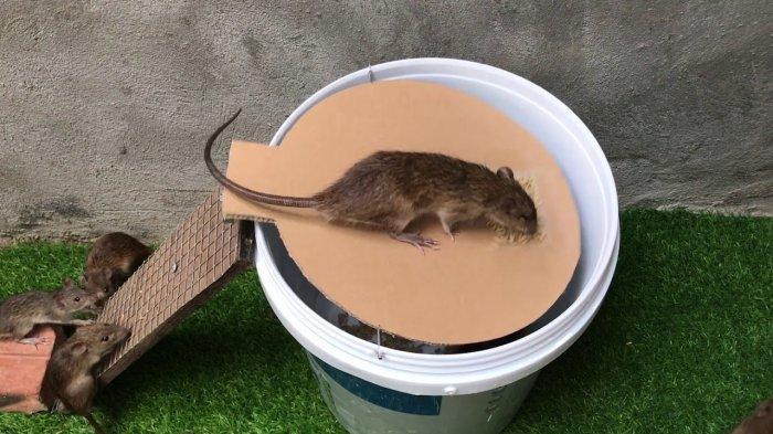 Termasuk Arang 5 Cara Mudah Dipercayai Menghilangkan Bau Bangkai Tikus dengan Bahan yang Ada Dirumah