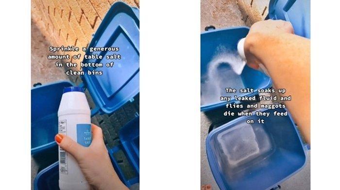 Tips atau Life Hack Mengusir Lalat dan Belatung dari Dalam Tempat Sampah, Mudah dan Gampang