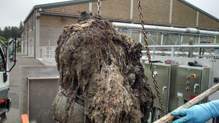 Bisa Picu 'Kekacauan Lingkungan' Akibat Buang Tisu Basah ke Dalam Toilet