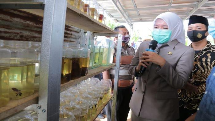 Kunjungan ke Budidaya Ikan Hias Wakil Walikota Palembang Bakal Jadikan Kampung Ikan Hias Percontohan