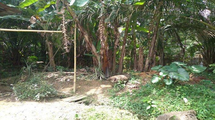 Lokasi Masih Dipenuhi Pohon Pisang, Warga Soal Pembangunan WC Stunting, Ini Kata Kades Tanah Pilih