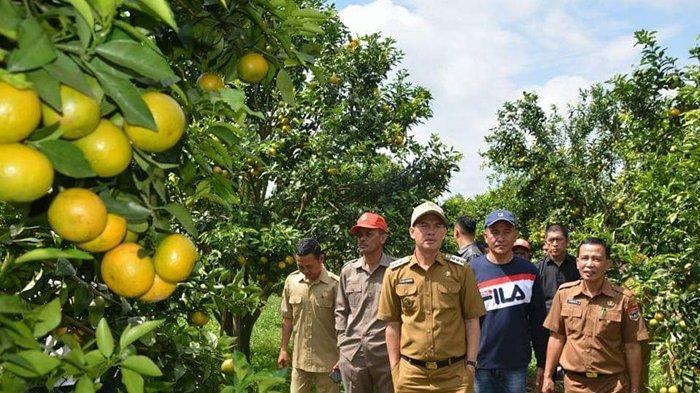Jadikan Objek Wisata Agrowisata, Wako Pagaralam Fokus Kembangkan Sektor Pertanian