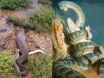 4-penemuan-ular-terbesar-dan-terpanjang-di-dunia-ada-2-di-kalimantan-panjangnya-capai-40-meter.jpg