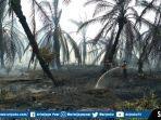 50-hektar-lahan-kebun-sawit-terbakar.jpg