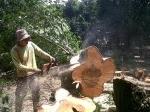 Pekerja-tebang-pohon.jpg