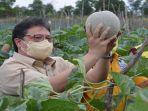 airlangga-hartarto-meninjau-pertanian-komoditas-tanaman-hortikultura.jpg