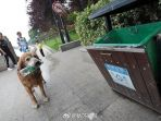 anjing-peduli-lingkungan_20170711_120508.jpg