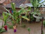banjir-di-desa-tanjung-beringin-okus.jpg