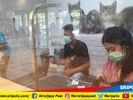 beberapa-jenis-kucing-peliharaan-sedang-melakukan-perawatan-di-evo-pets-palembang_20180929_172612.jpg