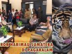 breaking-news-walikota-pagaralam-ungkap-harimau-sumatera-di-gunung-dempo-marah-dan-teror-warga.jpg