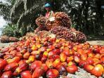 buah-kelapa-sawit.jpg