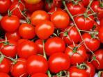 buah-tomat-merah.jpg