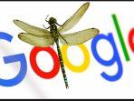 dragonfly_20180918_175350.jpg