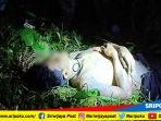 dua-hari-dan-satu-malam-mayat-penjahat-berjimat-kulit-harimau-ini-baru-ditemukan_20180803_172424.jpg