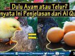 dulu-ayam-atau-telur-sering-jadi-pertanyaan-dan-perdebatan-ternyata-ini-penjelasan-dari-al-quran.jpg