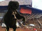 gajah-serang_20170809_192217.jpg