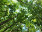 hutan-lindung_20161219_183222.jpg