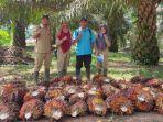 kebun-kelapa-sawit-betung-kerawo.jpg