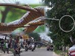 king-kobra-3-meter-bersemayam-di-pohon-hadang-pengendara-tim-damkar-dibikin-geger-tiba-tiba-hilang.jpg