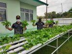 koramil-402-10kayuagung-sedang-memanen-sayuran-bayam-hidroponik.jpg