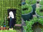 manfaatkan-lahan-sempit-di-rumah-untuk-berkebun.jpg