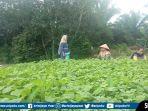 marlina-seorang-petani-sayuran-di-kelurahan-handayani-mulya-kecamatan-talang-ubi.jpg