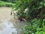mayat-mengapung-di-sungai-demam.jpg