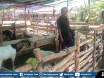 pedagang-hewan-kurban-di-jalan-merdeka-kelurahan-talang-ubi-selatan.jpg