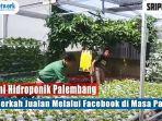petani-hidroponik-palembang-raih-berkah-jualan-melalui-facebook-di-masa-pandemi.jpg