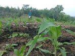 petani-jagung-di-desa-karet-jaya.jpg
