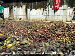 petani-kopi-di-desa-pematang-danau-kecamatan-sindang-danau-kabupaten-oku-selatan.jpg