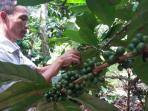 petani-kopi-di-lahat-mengecek-kondisi-biji-kopi_20160616_165038.jpg