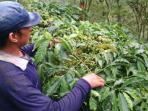 petani-rawat-tanaman-kopi_20160509_074140.jpg