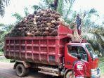 petani-sedang-memuat-tandah-buah-segar-keatas-mobil-truk.jpg