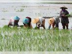 petanilahat.jpg
